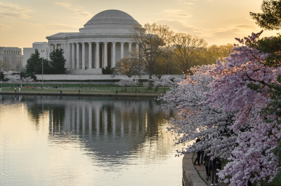 Jefferson Memorial and cherry blossoms, DC