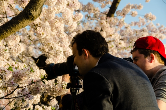 Photographing cherry blossoms, Washington DC