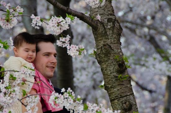 Cherry blossoms at Tidal Basin, Washington DC