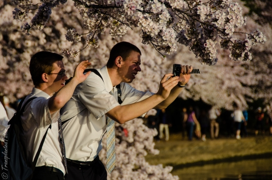 Tourists taking pictures of cherry blossoms, Tidal Basin, Washington, DC