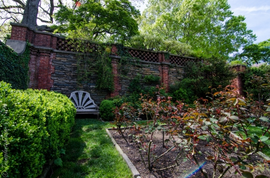 Dumbarton Oaks, Rose garden in April