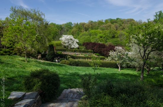 Dogwoods and the Prunus Walk, Dumbarton Oaks gardens, Washington DC