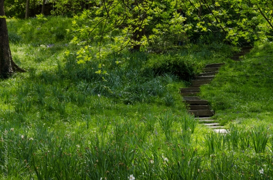 Dumbarton Oaks gardens, stairs to the Lovers' Lane Pool, Washington DC