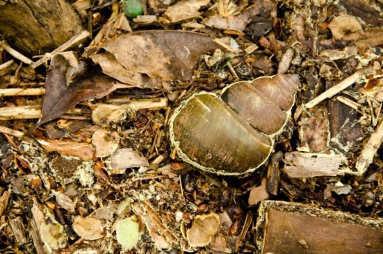 Abandoned shell, Dyke Marsh Wildlife Preserve
