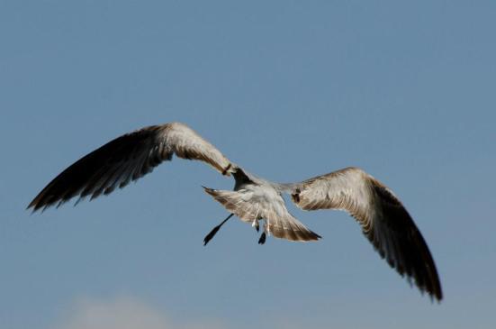 Bird at Dyke Marsh Wildlife Preserve