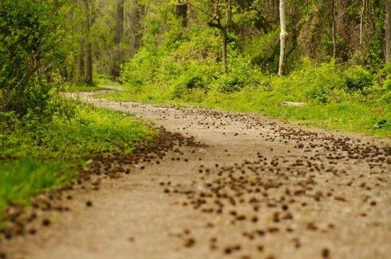 Dyke Marsh trail