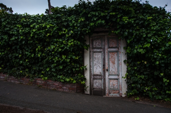 Door covered by vine in Carmel-by-the-Sea wall, California