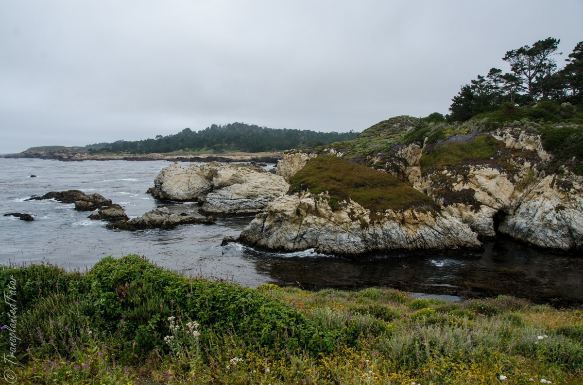 Point Lobos State Reserve cliffs and wildflowers