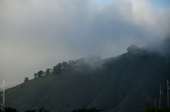 Hills of Point Lobos State Reserve in fog