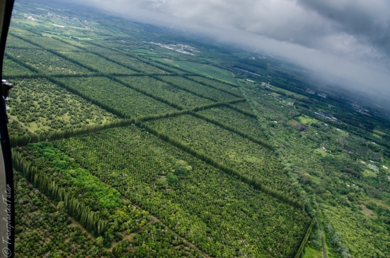 Helicopter flight over Hilo's macadamia nut farms