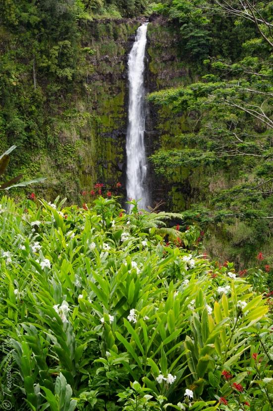Akaka Falls and flowers, Hawaii