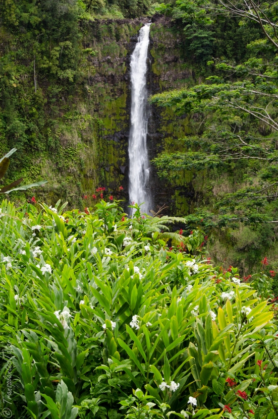 Akaka Falls and flowers, Hawaii