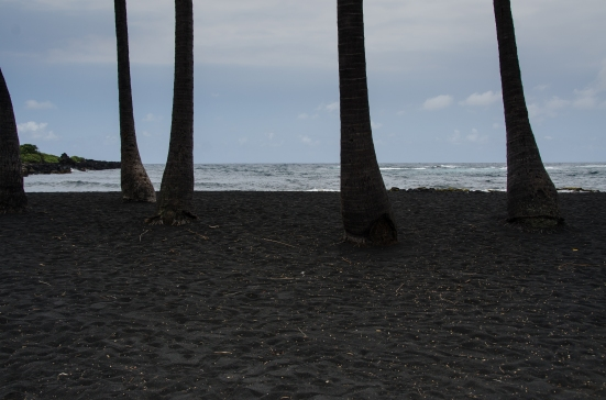 Coconut trees and black sand, Punalu'u Beach Park, Big Island, Hawaii