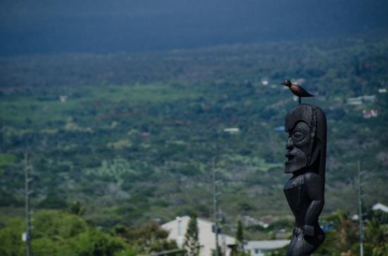Golden Plover on a statue at the 'Ahu'ena Heiau in Kailua-Kona on Hawaii's Big Island