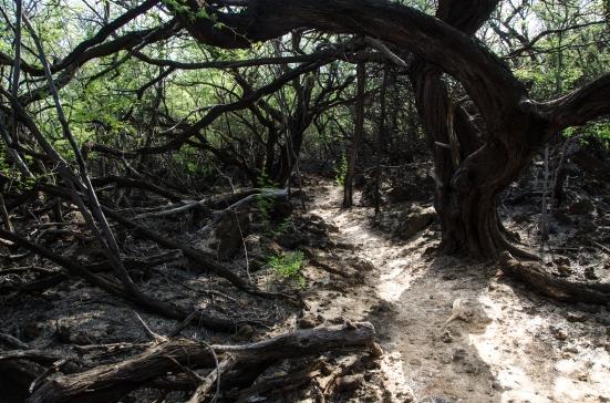 Trail to the Puako Petroglyph field, Big Island, Hawaii