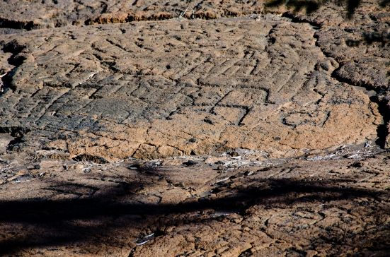 Petroglyphs of the Malama trail at the Puako Petroglyph Archaeological Preserve, Hawaii