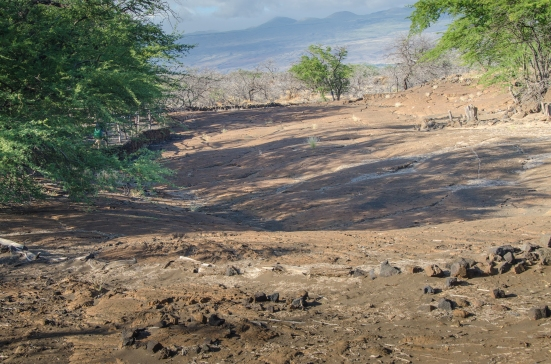Largest petroglyph field at the end of the Malama trail, Puako Petroglyph Archaeological Preserve, Hawaii