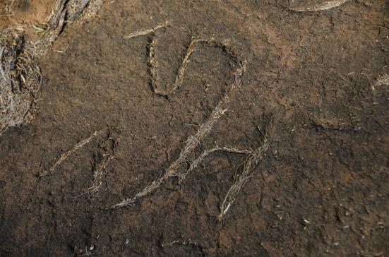 Needles in a petroglyph, Puako Petroglyph Archaeological Preserve, Hawaii