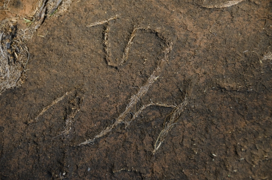 Needles in a petroglyph, Puako Petroglyph Archaeological Preserve, Hawaii