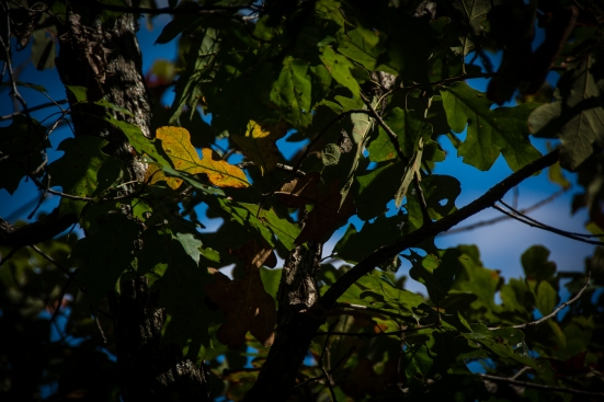 Fall foliage, Great Falls, VA