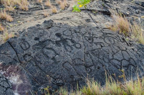 Carvings along the Pu'u Loa Petroglyph Trail, Volcanoes National Park, Hawaii