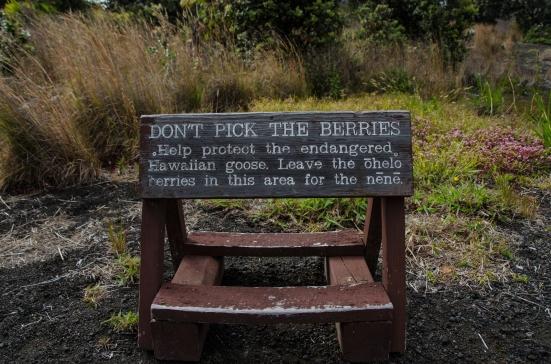 Nene warning sign, Devastation Trail,