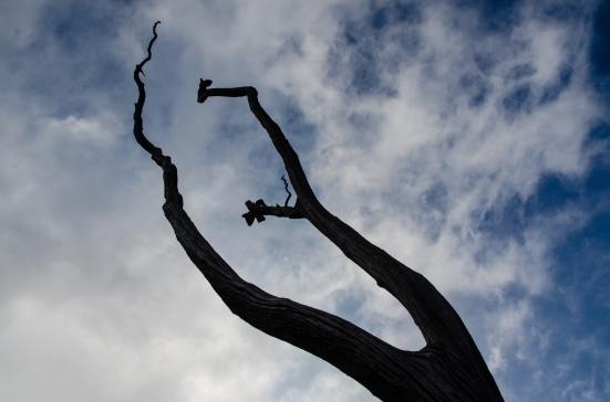 Dead tree on Devastation Trail, Hawai'i Volcanoes National Park